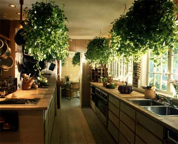 Feng Shui Kitchen with Plants